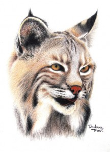 BarbaraTrustBobcat