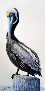 Posing Pelican, Watercolor, 8x13