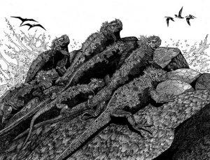 Galapagos Iguanas Hiser