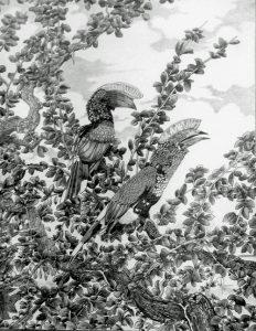 Silver Hornbills Hiser