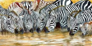 Zebra Pool Hiser