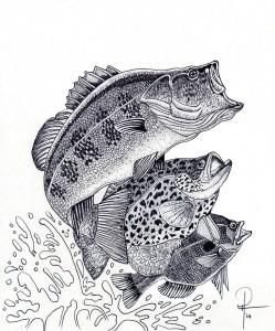 bassfishDoughiser1st drawing