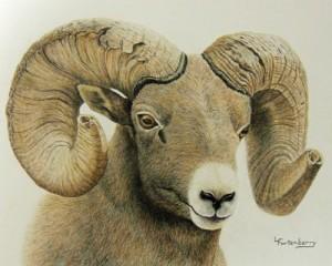 Big-Horn-Ram,-Prismacolor-P