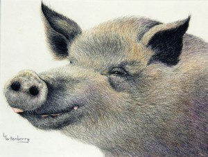 Happy-Hog,-8x10,-Prismacolo