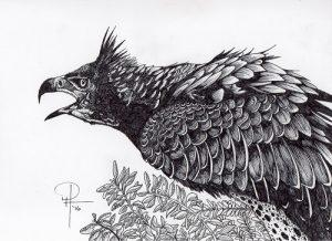 African Eagle Hiser