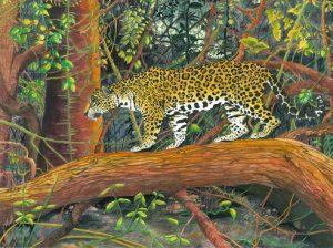 Jaguar Pantanal Hiser