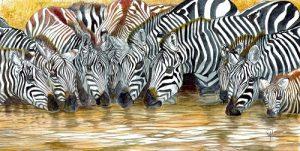 Zebra Pool Hiser